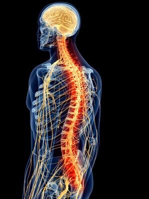 Lighted Nervous System